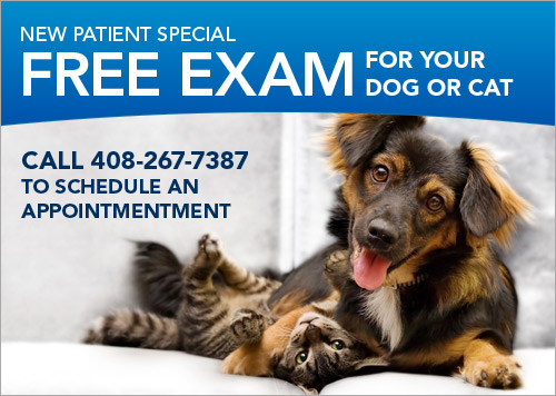 Animal Medical Center San Jose Coupon